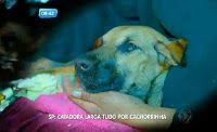 Animais: seres amados! /  Adoção. Defesa animal. Ongs, abrigos e projetos.