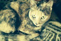 Кошки / Кошки-загадочные существа