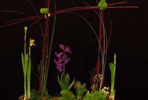 Spring 2014 / Floral Inspiraration for Spring