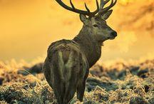 Animal Totems / Our spirit animals