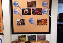 exploration education ideas / Providing activities for students to explore with in the classroom.  Looking details, discovering information, experimenting with ideas from other sources to see what they can create.  Inspired by Reggio education