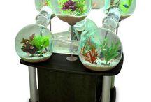 Akvaarioita!