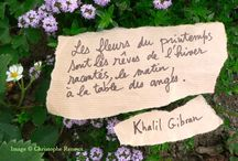 proverbes rose