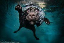 Animals / by Sarah Miller