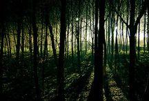 Trees and Wildlife I love