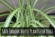 Improve indoor air