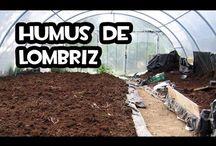 Lombrices / Aquí aprenderás los pasos necesarios para hacer humus de lombriz, el mejor abono orgánico. Todo lo relacionado con las lombrices lo pineare aquí.