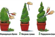 Landscaping | how to
