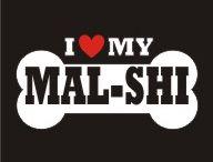 malshi dogs
