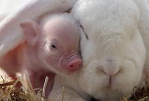 cute bunnys and piggles