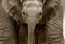 Elephant Love  / by Cristina Tobias Lopez