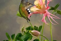 păsări