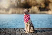 DOG BANDANA / Our collection of stylish, handmade dog bandanas are made in the UK from the finest quality cloth. We've used lightweight, breathable fabrics, such as cotton and linen to help keep your dog cool throughout the summer, and warm during those colder months.