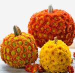 Thanksgiving & fall / Decorations for thanksgiving & fall / by Heather Block