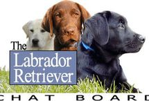 All Things Labrador / I am a bit obsessed with all things labrador. I figured this would be a good place to keep it all under one roof :)
