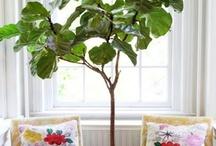 Elegant interiors / Creative, beautiful interior designs