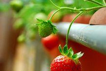 Strawberry - Mansikka /  ❤ Love Strawberries