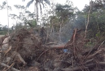 Rainforest destruction Ecuador / Rainforest destruction Ecuador http://itapoareserve.com I used to volunteer with Itapoa Rainforest Reserve