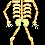 Human Body/Health