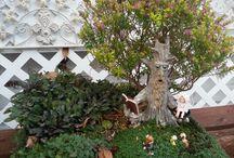 Fairy garden / Fairy gardens