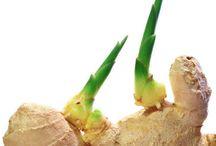 Zwiebeln/Knollen/Ananas etc. vermehren