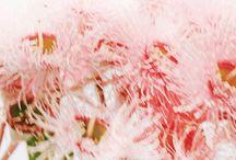 pinkpinkpink