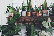 Beautiful houseplants / How to incorporate greenery into your living space