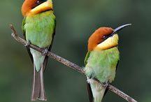 Cute birds / Awesome birds