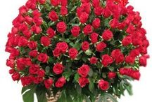 Buy Beautiful Roses Basket Online and Send it to Bhopal,India / their own and with FlowersCakesOnline.com you can easily send flowers to India. You can purchase a flowers vase, flowers bunches and flowers bouquets online according to your choice and budgets.
