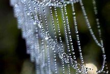 spinnendingen