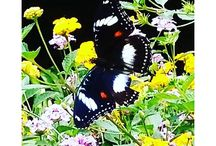 Nature / Butterfly
