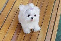 Puppy's toy mini cute ❤ Piccoli cagnetti teneri .