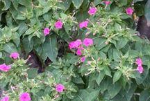 Bahçem
