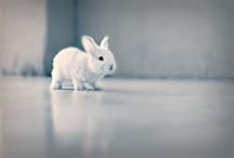 Cute / by Lauren Engelken