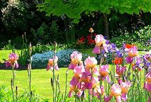 Gardens / by Sharon Sheehan
