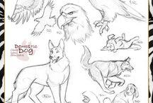 animal reference drawing