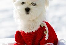 Christmas dogs/puppies!