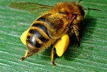 Honey bees / by coffeetable tv