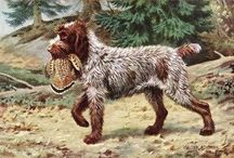 Our Life:  Wirehaired Pointing Griffons #sadiemae
