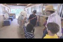 Kids learn about Animals! / Kids learn about animals!
