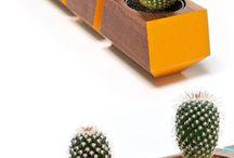 Cactus Design