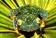 Amazon Wildlife / Wildlife photographed on GreenTracks Amazon cruises and tours.