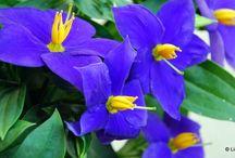 Kert & Virágok