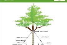 Planter un arbre comme un pro ! / Techniques de plantation, matériels adaptés, astuces...des conseils de pro pour aider toutes les mains vertes.