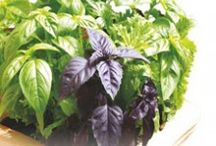 Herb Seeds / Herb Seeds, Herb Seeds Online India, Buy Seeds Online India, Seeds Company In India, Order Seeds Online, Seeds Online India