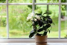 Plants for my garden