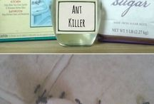 ants,    cleaning house