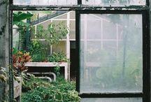 serres / serres - jardins d'hiver