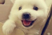 79. Puppys.   G / Jonge hondjes