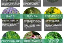 Herb / Medicinal garden